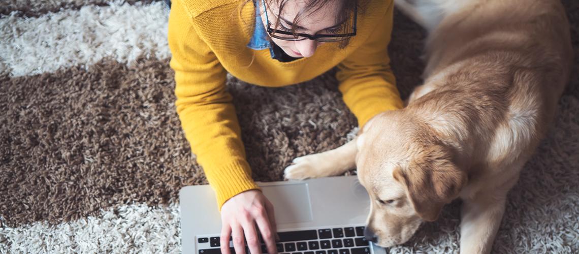 Pet insurance 101 Post Image